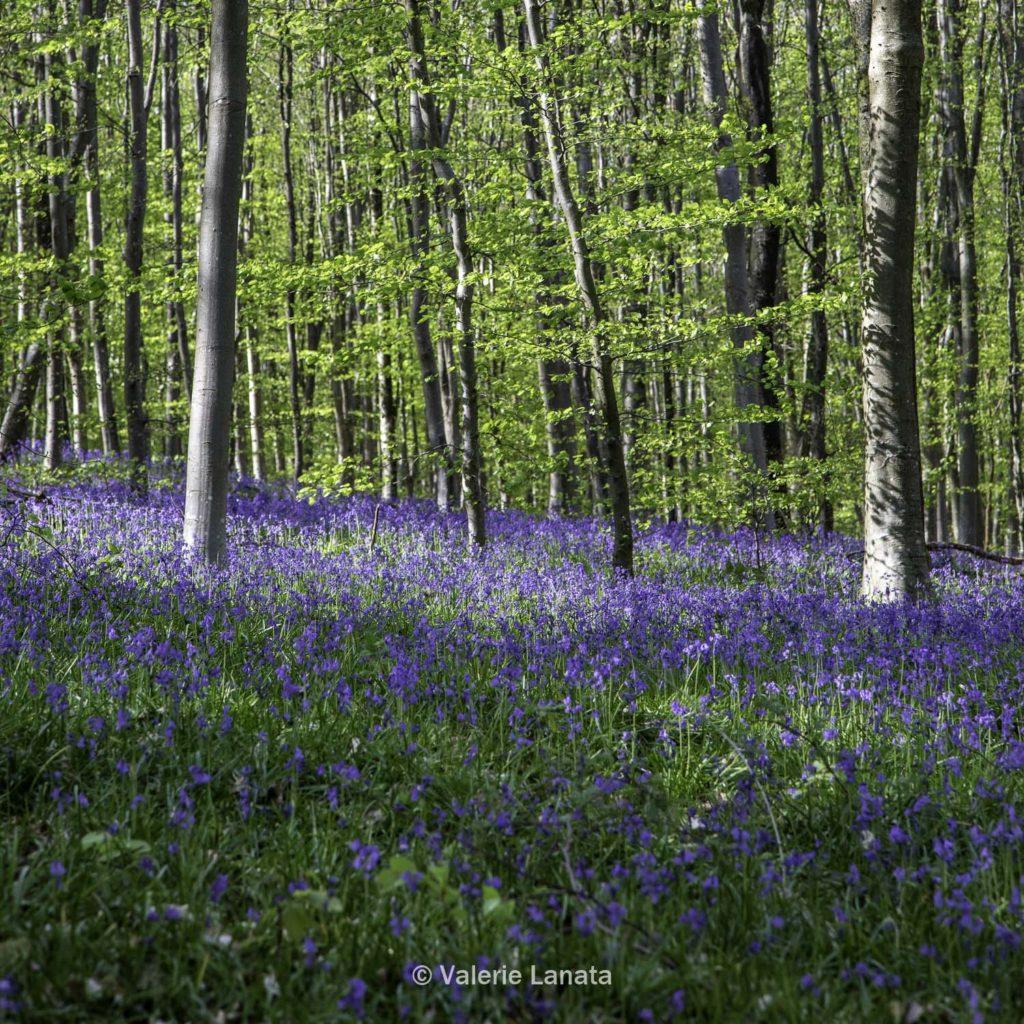 La forêt verte de Rouen au printemps. Promenade en famille pendant le week end de Paques.